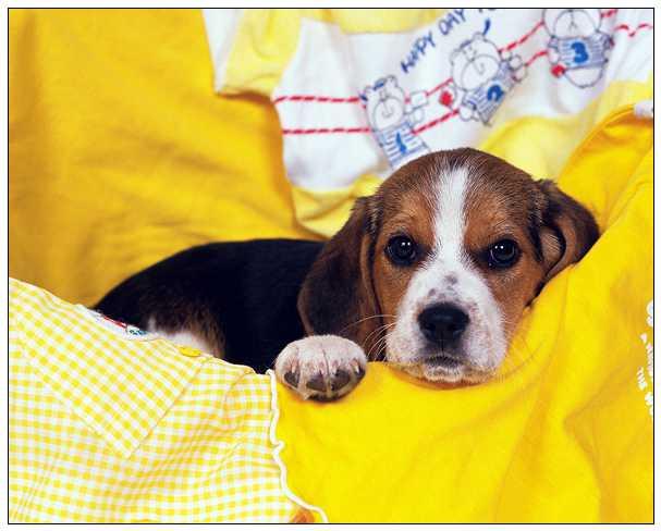 汪遭饲主弃养还被车撞 幸遇到了善心人士相救 自贡宠物网站