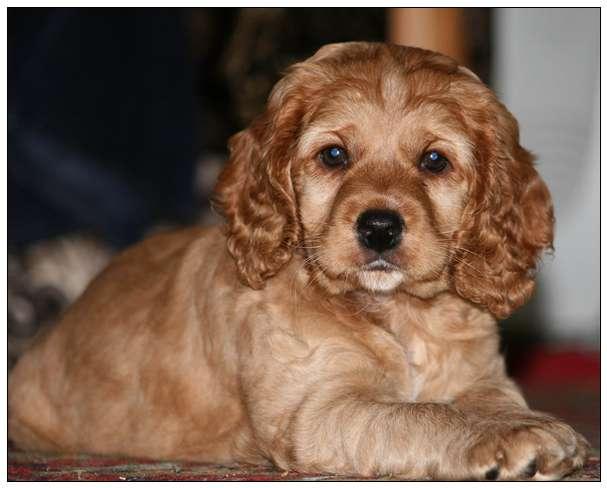 【测试】你家狗狗抑郁了没? 萨摩犬舍