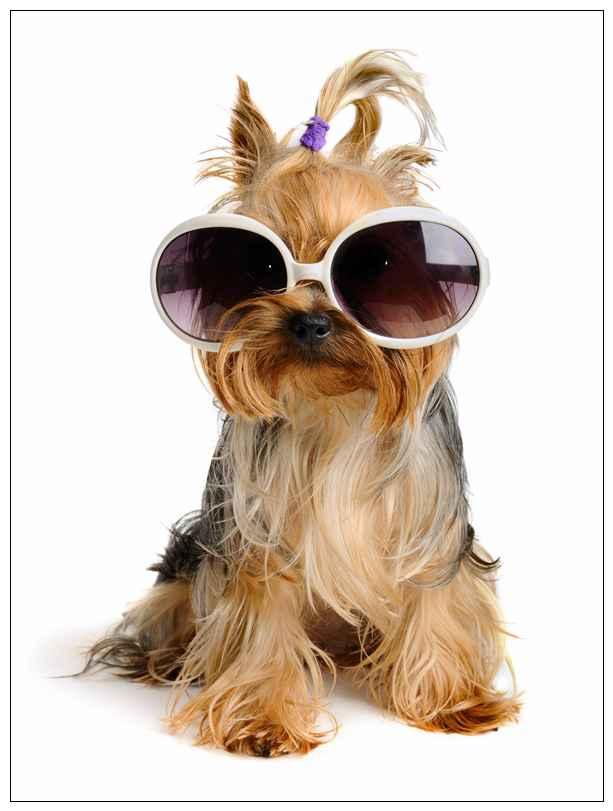 柴犬与大黄狗相似度颇高为何身价与知名度却相差甚远? 玉林宠物网站大全