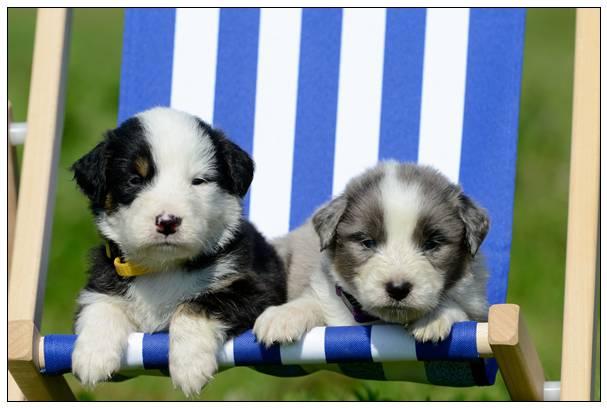 狗狗喜欢的玩具小黄鸭入睡也带在身旁讨人喜欢一幕呆萌了