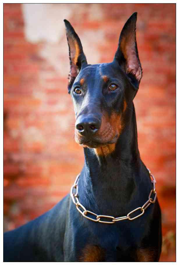 狗狗被人饿到只剩皮包骨还被拴着过见样心痛到流泪