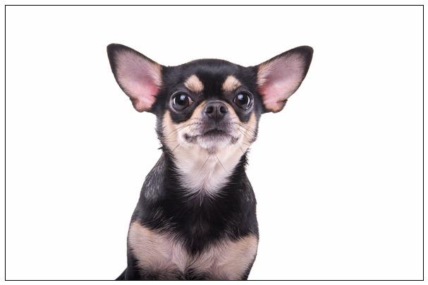 城市美清洁工遇到流浪小动物会发生一些什么样的故事呢? 昆明宠物网站