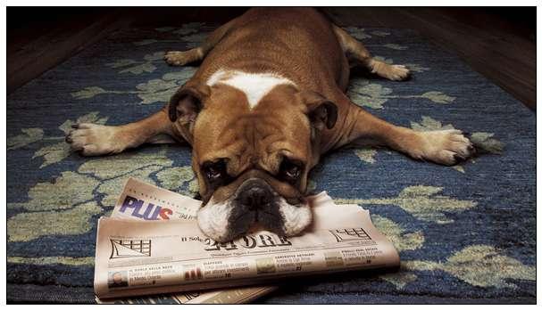 大黄金学会了所有指令讨好人 下场却在收容所 珠海宠物网站