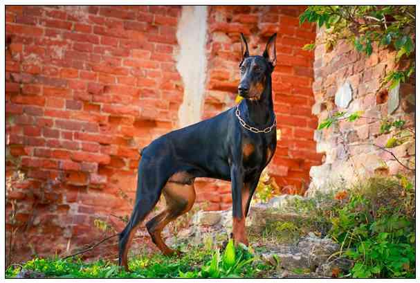 【测试】从喜欢的狗狗看出你的职场个性 西施犬多少钱一只