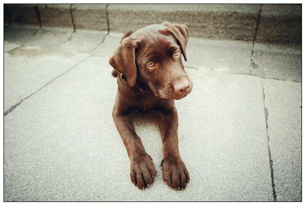 狗狗会无聊吗狗狗无聊都会做什么? 罗维纳犬