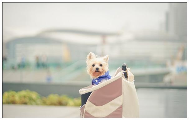 爱犬不相信主人离世 满眼泪水守老宅门前3天 天津宠物美容培训学校