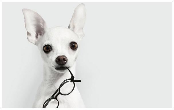 人们反感的不文明行为养宠物个人行为是...... 厦门宠物论坛