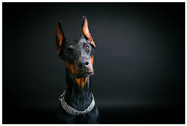 皇家宠物食品为流浪猫犬创造一个更美好的世界 宠物波比