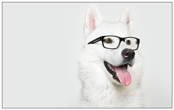 宠物狗狗比熊犬美容护理都有哪些