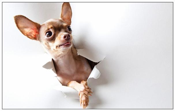 狗狗体味重怎么办 狗狗体味重的原因分析之解决办法