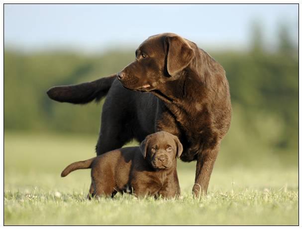 家犬因超宽将会被养犬主:可否评定性情明确是不是具报复心理? 上海 宠物市场
