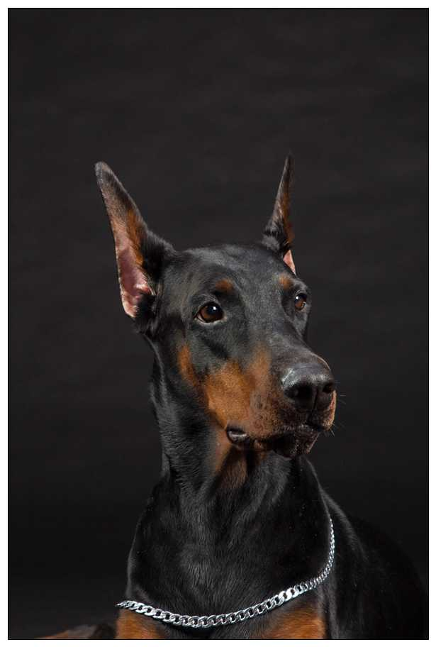 献给这6种担任缉毒犬的狗狗!他们讨人喜欢可敬 福州宠物网