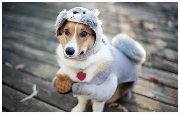 国航宠物托运有哪些要求 哪个航空公司可以托运宠物