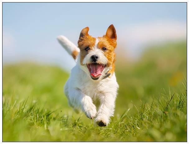 """"""" 科学报告 """"发表新研究结果 养狗可以让人长寿 宠物虫噬骨"""