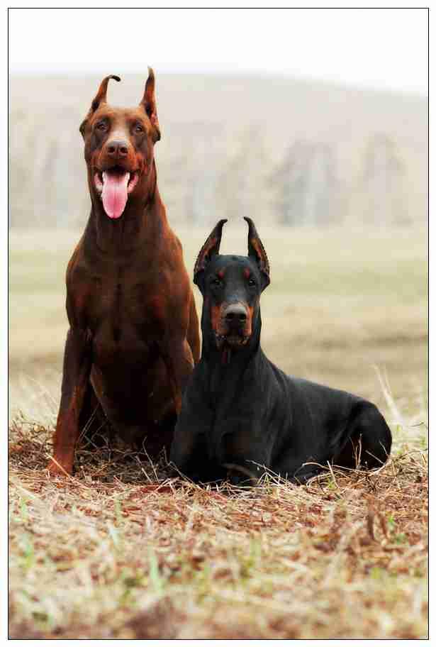 当狗狗想念一个人的时候会做这种事情 原来养狗真的很暖心 崇左宠物网站