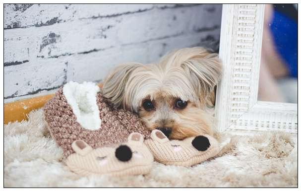 卡高速路中间哭泣的狗狗 现在迎来了幸福的家还交上了猫咪朋友 柳州宠物网站