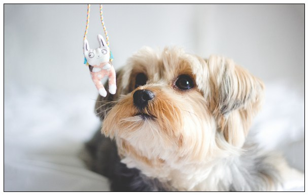 狗狗常呕吐什么原因?WOWO复合益生菌帮狗狗调理肠胃 莱芜宠物网站大全