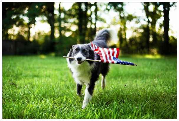 可爱检疫犬超认真执勤 很多旅客想要一起拍照 百色宠物网站