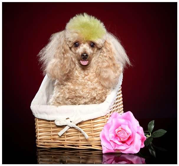 12星座适合养什么宠物小狗狗?