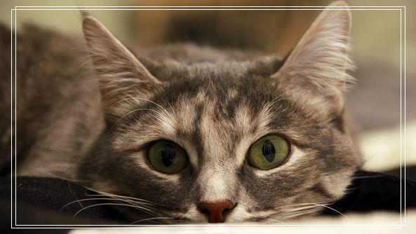 坐上诊疗台狂哈气 结束狞猫一脸世界名犬图呆萌愣在原地