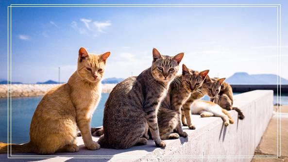 宠物饲养许可证 宝仔屋宠物美容学校