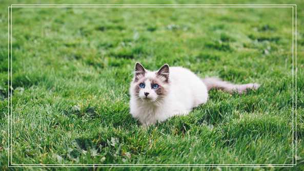 上海宠物网站 重庆 宠物