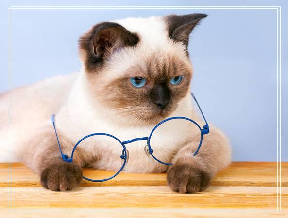 巴曼猫 宠物医院软件