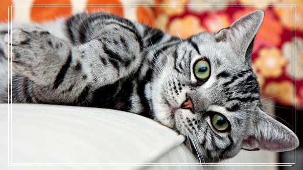 猫真菌感染 宠物医生培训学校