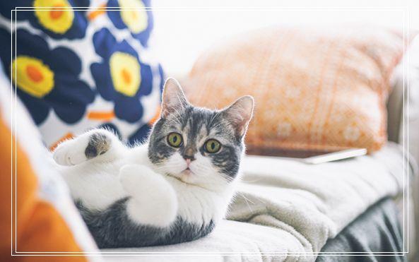 宠物寄养 猫咪真菌感染