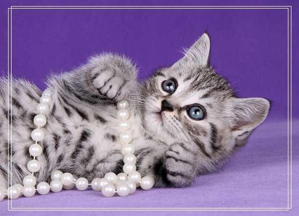 泰州宠物 宠物寄养所