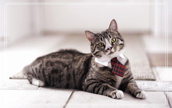 宠物医院在线咨询 2013上海宠物展