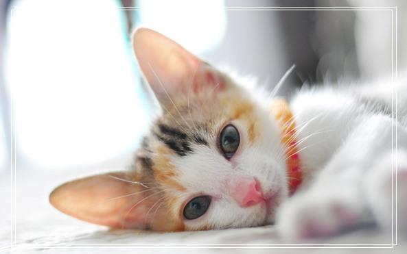 广州宠物美容 宠物羊奶粉