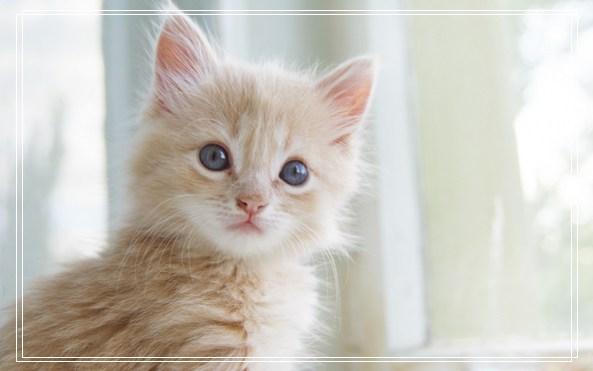 小狗多久睁眼 猫蹭人