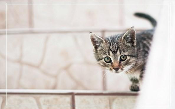 宠物管家 宠物图片