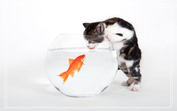 宠物在线医院 哪个快递可以寄宠物