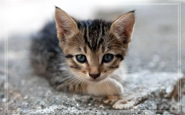 派多格宠物美容培训 一个宠物美容师的自述