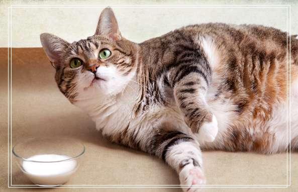 哪个快递可以寄宠物 猫咪真菌感染