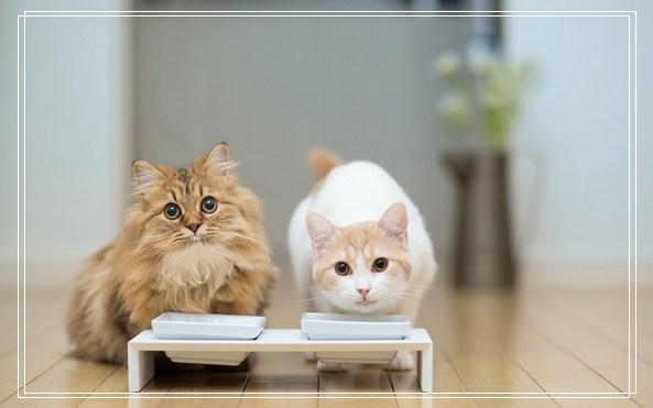 什么快递可以寄宠物 养什么宠物