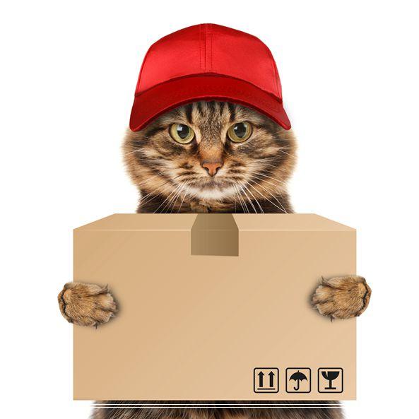 宁波宠物 世界名猫