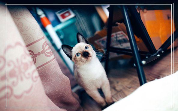 教你怎样给猫咪清洁 北京正规猫舍