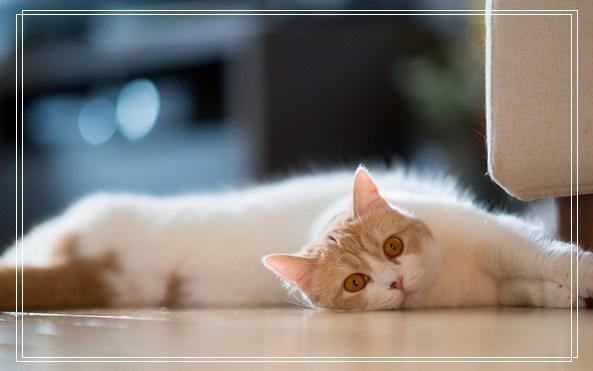 宠物食品批发市场 宠物医生网