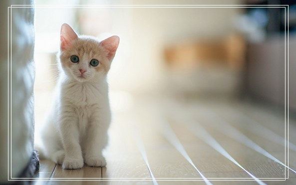 宠物用品团购 宠物网站