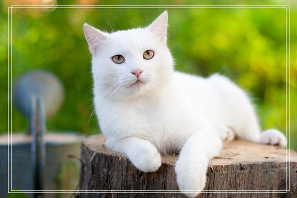 宠物美容师工资 成都宠物美容培训学校