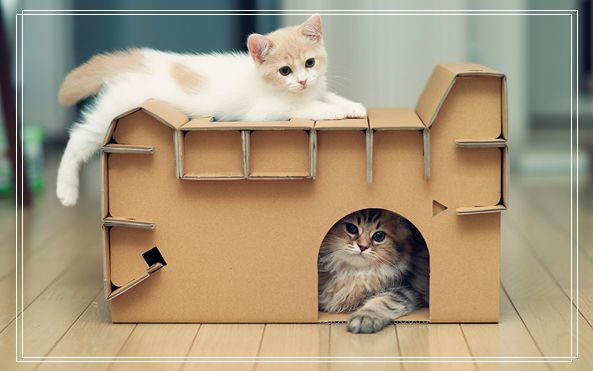 什么快递可以寄宠物 宠物用品进货渠道
