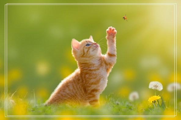 宠物美容师培训教程 猫咪真菌感染