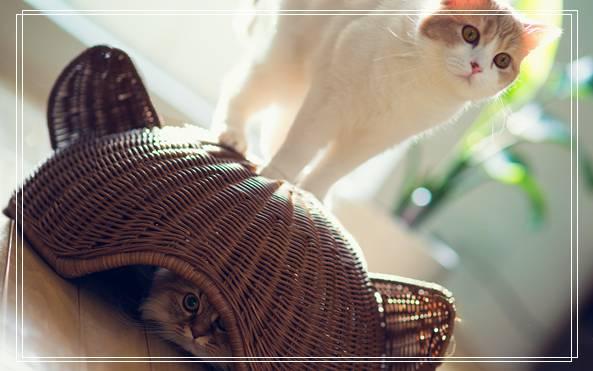 宠物碗 宠物世界