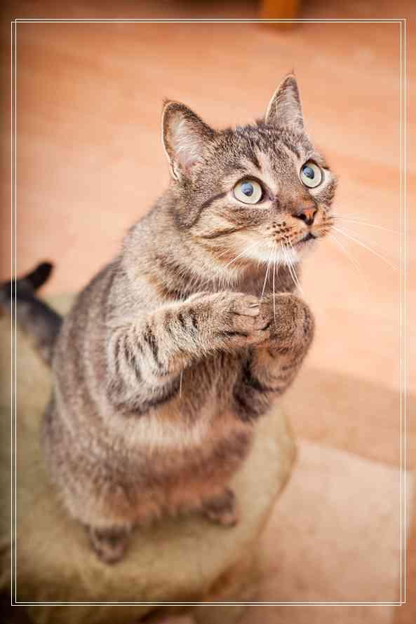猫咪食欲异常怎么办的相关问题