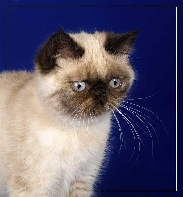 幼猫喂食注意事项 饲养幼猫注意什么