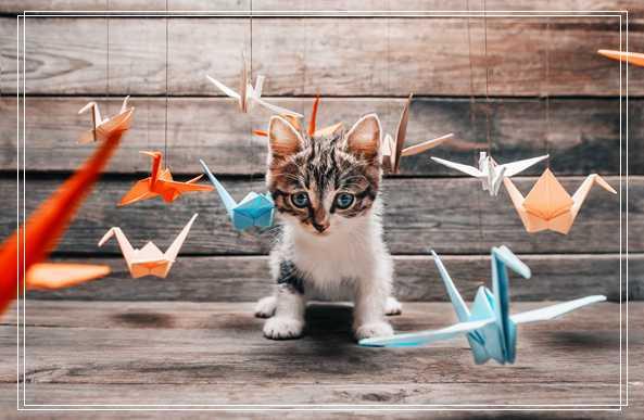 带你了解小猫猫咪的生长发育的全过程