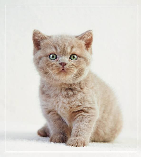 细数猫咪不为人知的另一面